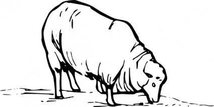 Earting Sheep clip art
