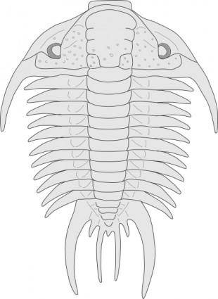Fossil Of The Asaphus Species clip art