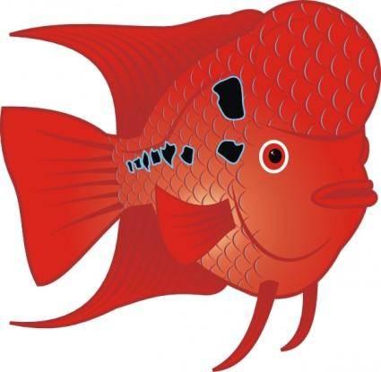 Flowerhorn Fish clip art