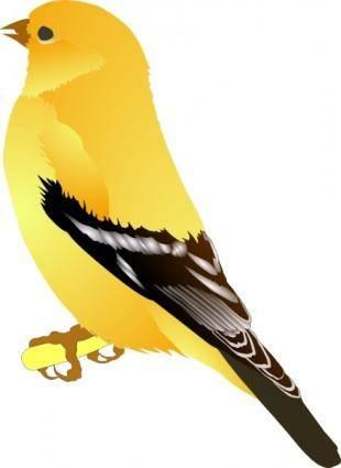 Gold Finch clip art