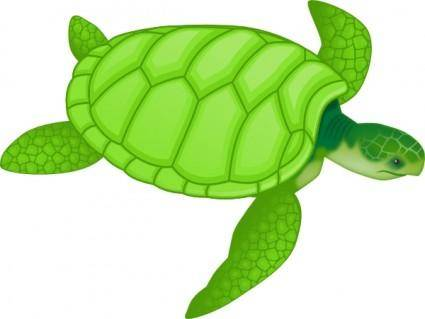 Green Sea Turtle clip art