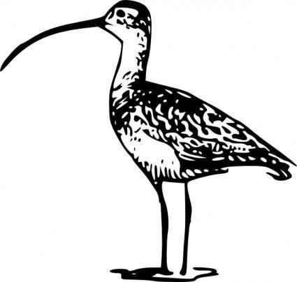 free vector Standing Bird Billed clip art