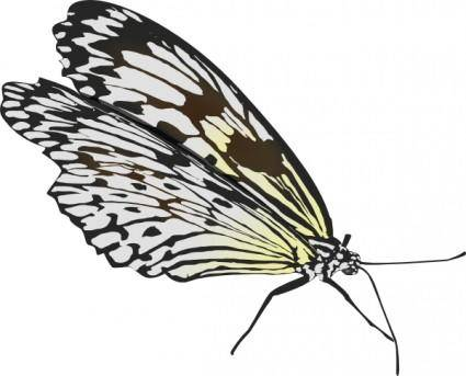 free vector Glombool Butterfly clip art