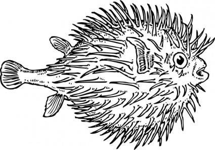 Blowfish clip art