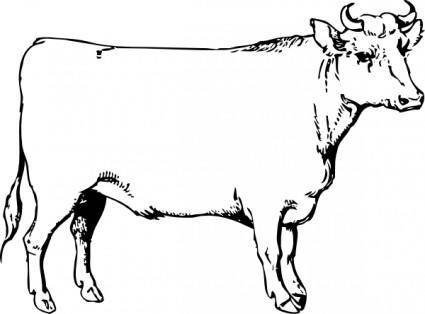 Ox clip art