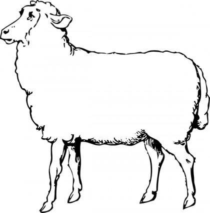 free vector Sheep clip art