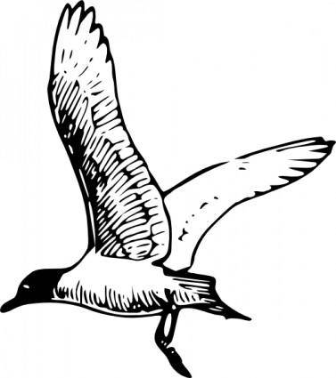 free vector Franklins Gull clip art