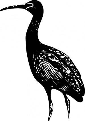 free vector Glossy Ibis clip art