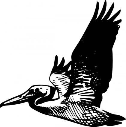 Flying Pelican clip art