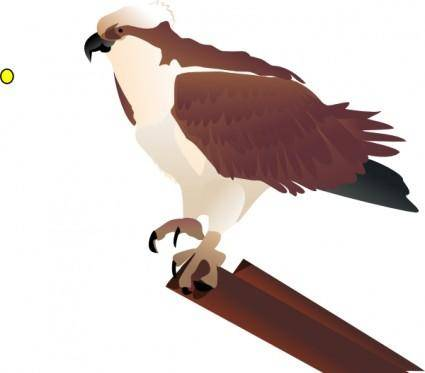 free vector Osprey Standing On Branch clip art