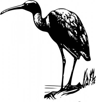 Glossy Ibis clip art