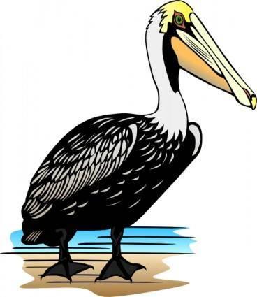 Pelican clip art