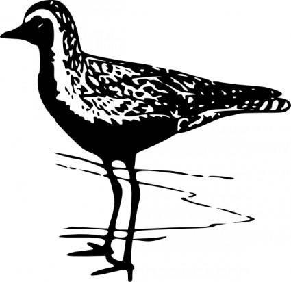 Golden Plover clip art