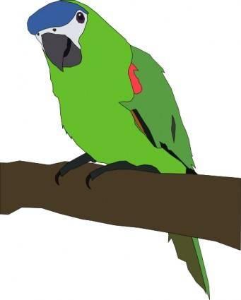 Papousek clip art