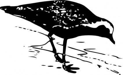 free vector Golden Plover clip art