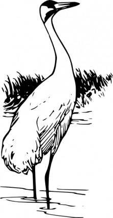 Whooping Crane clip art