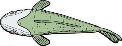 Fish Top View clip art
