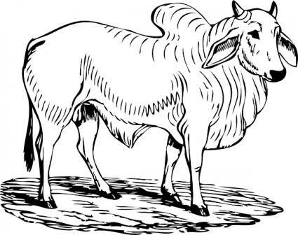 Brahma Bull clip art