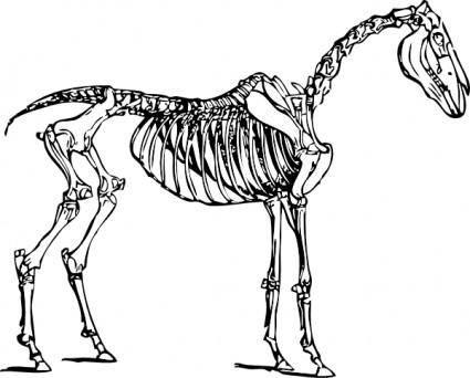 Horse Skeleton clip art