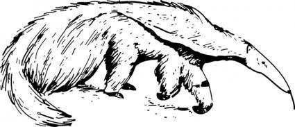 Anteater clip art