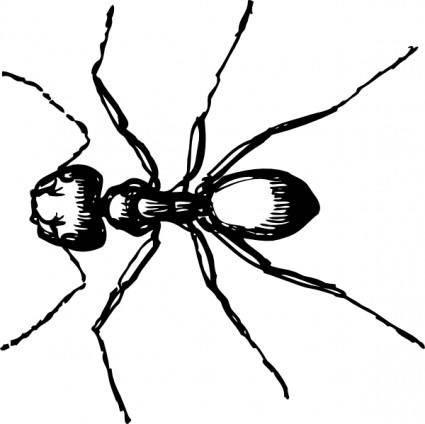 Carpenter Ant clip art