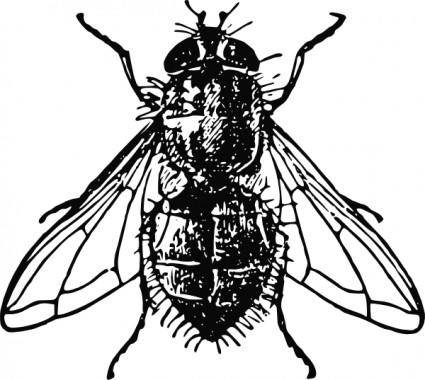 free vector Peterm Housefly clip art