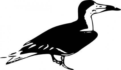 free vector Black Skimmer clip art