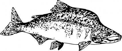 Pink Salmon clip art