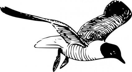 The Laughing Gull clip art