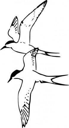 Arctic Tern clip art