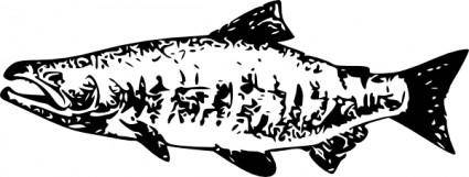 free vector Salmon clip art