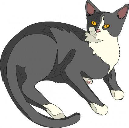 Gatto Cat clip art