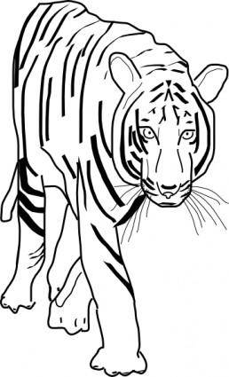 free vector B_w Tiger clip art