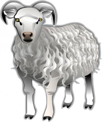 Sheep Md V clip art