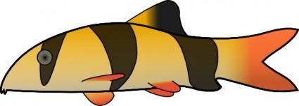 Clown Loach clip art