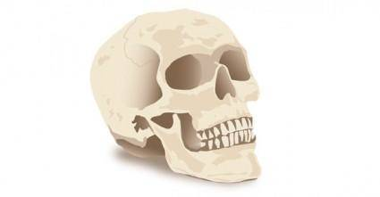 free vector Halloween Skull Vector