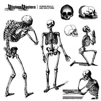 free vector Human Skulls and Skeletons