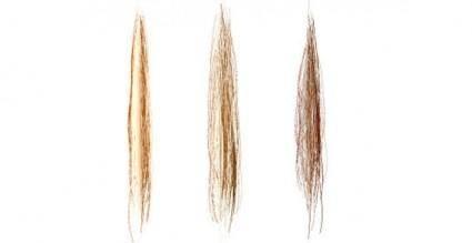 free vector Hair vector