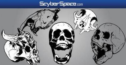 free vector Skull vectors