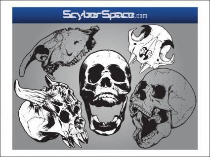 Free Vector Skulls