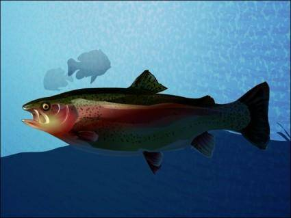 free vector Trout