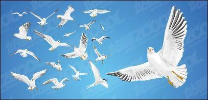 Various movements of seagulls vector material