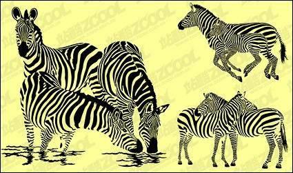 Zebra vector material