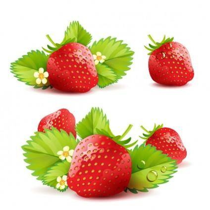 Strawberry theme background 05 vector