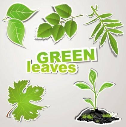 free vector Fine leaf label 02 vector