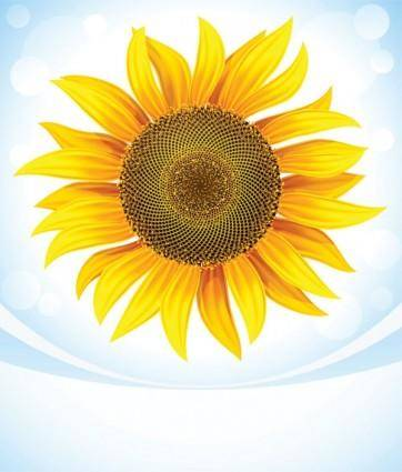 Sunflower 05 vector