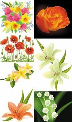 free vector Beautiful flowers flowers vector