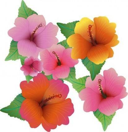 free vector Free Vector Illustration With Hibiscus Flowers