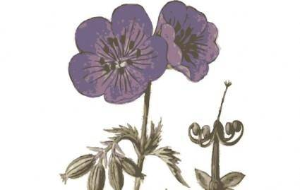 free vector Purple Flowers