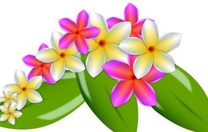 free vector Plumeria Vector Flowers